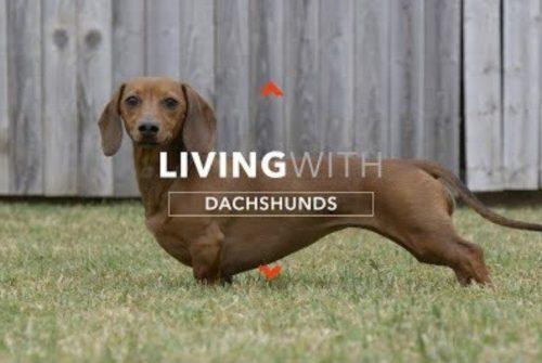 Dachshund Dogumentary